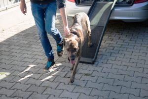 Praktische Hunderampe am Auto