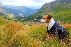 Hund mit blauen Hunderegenmantel