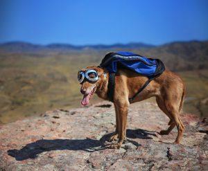 Hund mit Hunderucksack im Gebirge