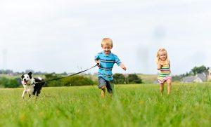 Border Collie spielt mit Kinder