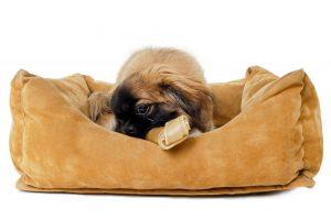 Kleiner Hund im orthopädischen Hundebett