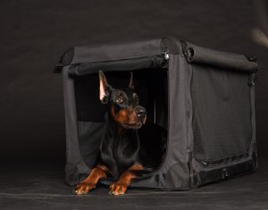 Dobermann in schwarzer Hundebox