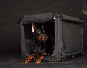 Dobermann in schwarzer Hundebox