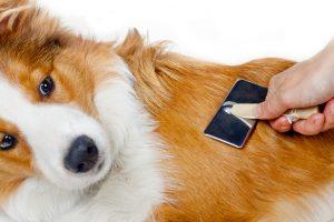 Fellpflege mit Hundebürste