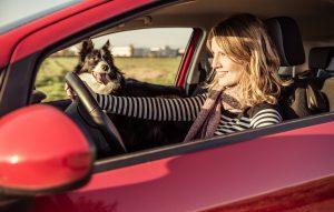 Frau mit Border Collie im Auto