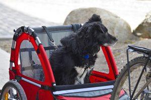 Roter Hundefahrradanhänger und Hund