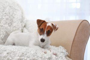 Hund auf weißer Hundedecke