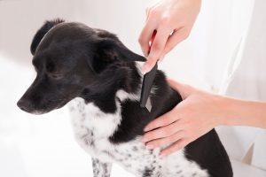 Schwarz-weißer Hund wird gebürstet