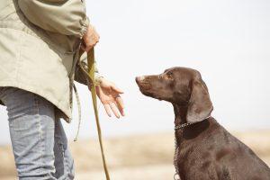 Man trainiert braunen Hund