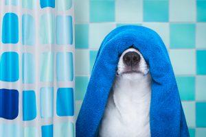 Hund mit Handtuch in Dusche