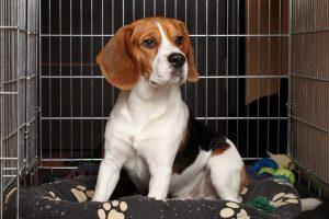 Niedlicher Hund in Käfig