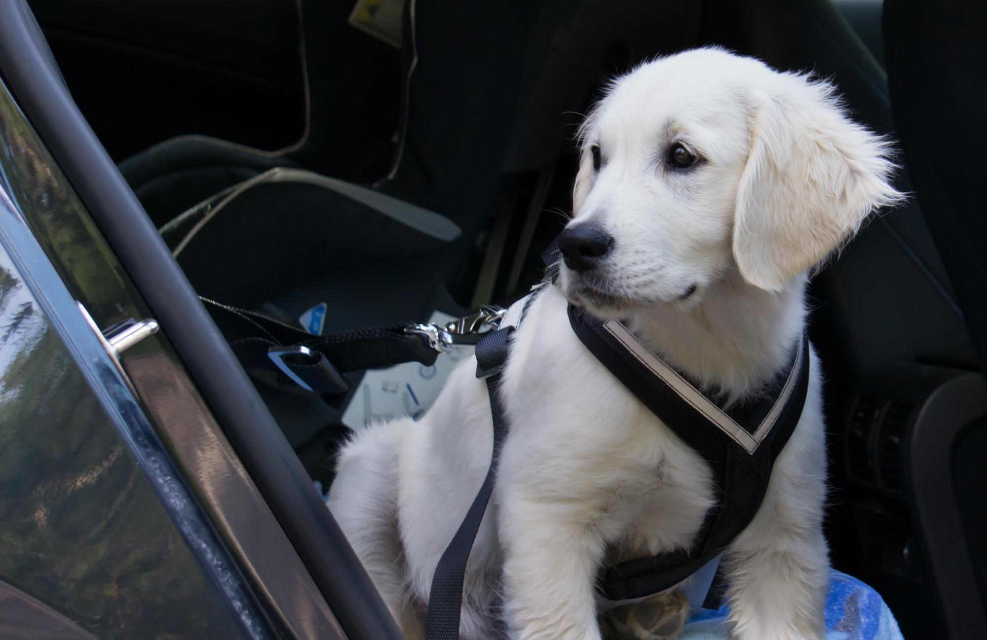 Hundegeschirr Test 2018 ▷ die besten im Ratgeber & Vergleich
