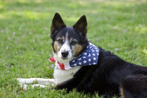 Hund mit Halstuch auf Rasen