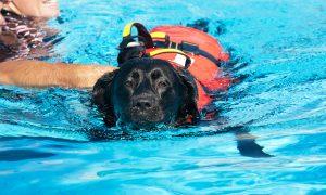 Schwarzer Hund mit Schwimmweste