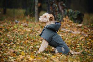 Kleiner Hund mit Regenmantel