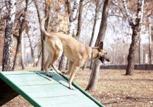 Training auf Hunderampe