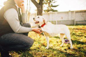 Mann mit Hund beim Trainieren