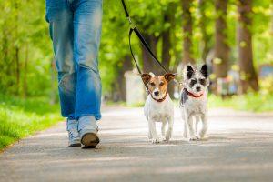 Zwei Hunde beim Gassi gehen