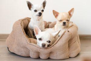 Drei niedliche Welpen auf Hundesofa