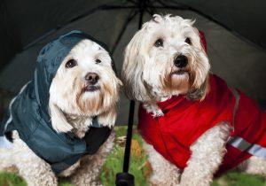 Hunde mit Regenschirm und Hunderegenmantel