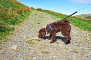 Praktisches Hundegeschirr beim Gassi gehen