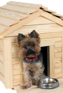 Kleiner Hund vor Hundehütte aus Holz