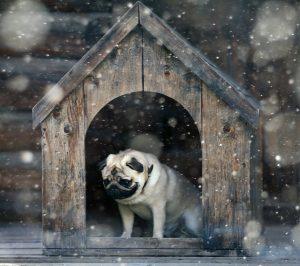 Kleiner Mops in Hundehütte