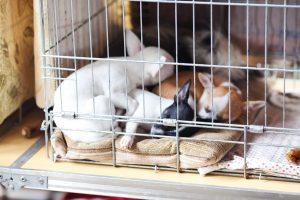 Welpen in Hundekäfig mit Decke