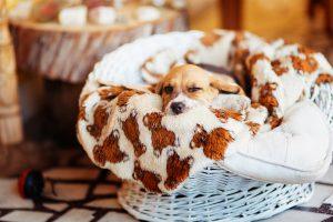 Niedlicher Welpe in Hundekorb