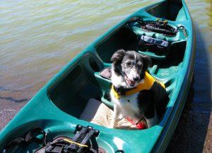 Hund mit Schwimmweste im Kanu