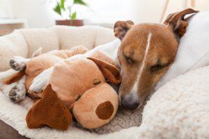 Hund schläft mit Kuschelfreund auf Hundesofa