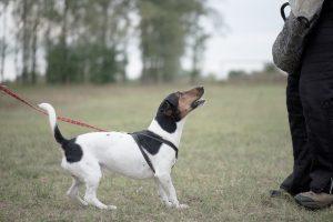 Kleiner Hund an Schleppleine