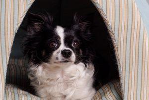 Kleiner Hund in Hundehöhle