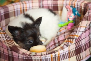 Welpe im orthopädischen Hundebett