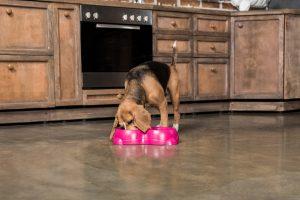 Hund mit pinken Hundenapf
