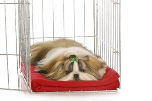 Hund in Box mit roter Decke