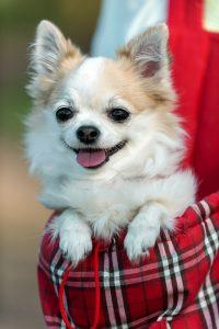 Roter Hunderucksack mit Hund
