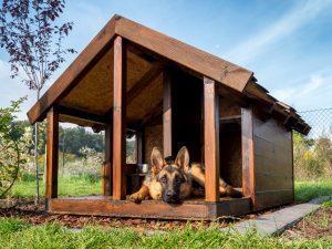 Schäferhund in Hundehütte aus Holz