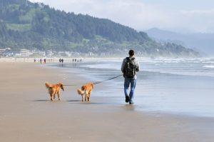 Mann mit zwei Hunden an Schleppleine