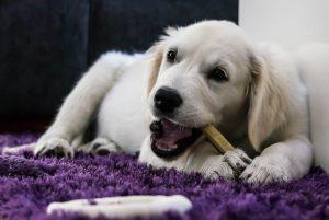 Niedlicher Welpe mit Hundeknochen
